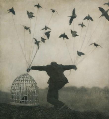 art-artistic-beautiful-bird-birds-Favim_com-418997